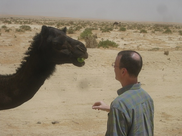 Saudi = Feeding the roadside camels near Riyadh