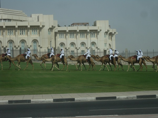 In the middle east there are still actual camel races and the most wealthy keep a heard for demonstration purposes
