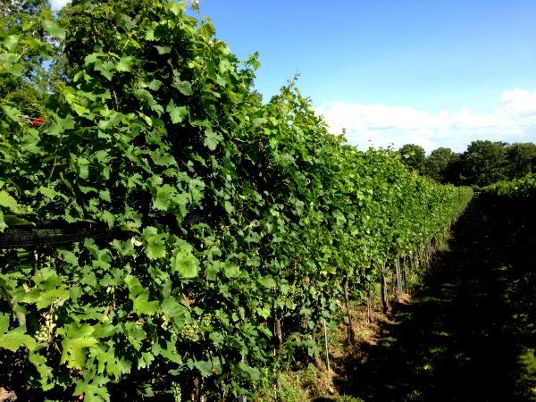 winery at lagrange vines