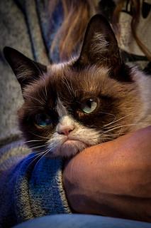 Grumpy Cat at DSSM
