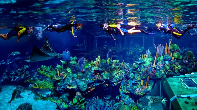 Epcot Aqua Seas Tour