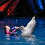 Georgia Aquarium Introduces New Aquatic Shows